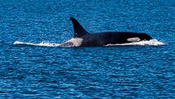orca1-blog