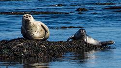 Harbour seals 2-blog
